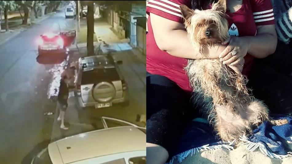Violento portonazo en Maipú: sujetos se llevan hasta el perro de la familia en el auto