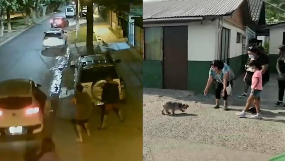 Robo de mascotas: El lucrativo delito que está al alza en Chile