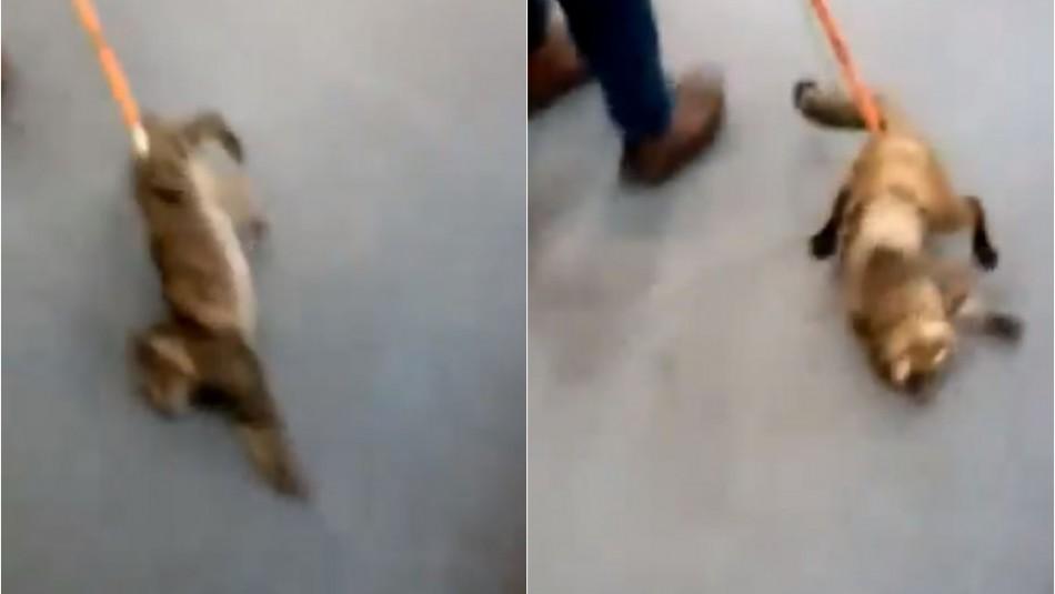 [VIDEO] Denuncian maltrato animal contra un gato en sucursal bancaria