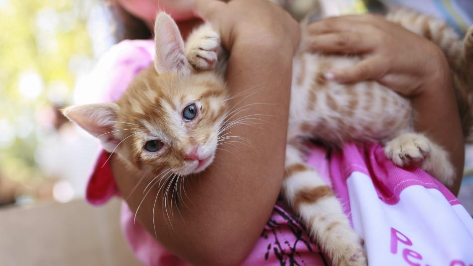 Master Cat realiza retiro preventivo de alimento tras denuncias por daño a salud de mascotas