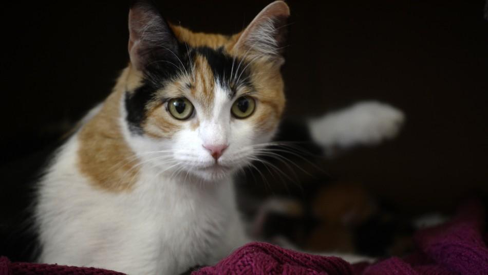 Colegio Veterinario y denuncias por comida de gatos: