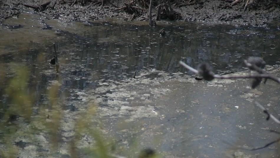 Denuncian que lanzan residuos de baños químicos a humedal de Mantagua