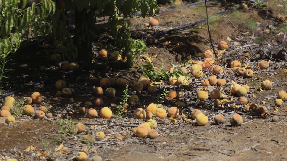 Ministerio de Agricultura declara emergencia agrícola para 10 comunas de la región de Valparaíso