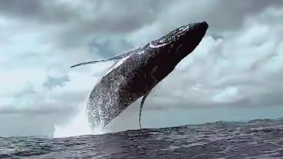 Documentalista chileno dejó su acomodada vida de negocios para seguir ballenas