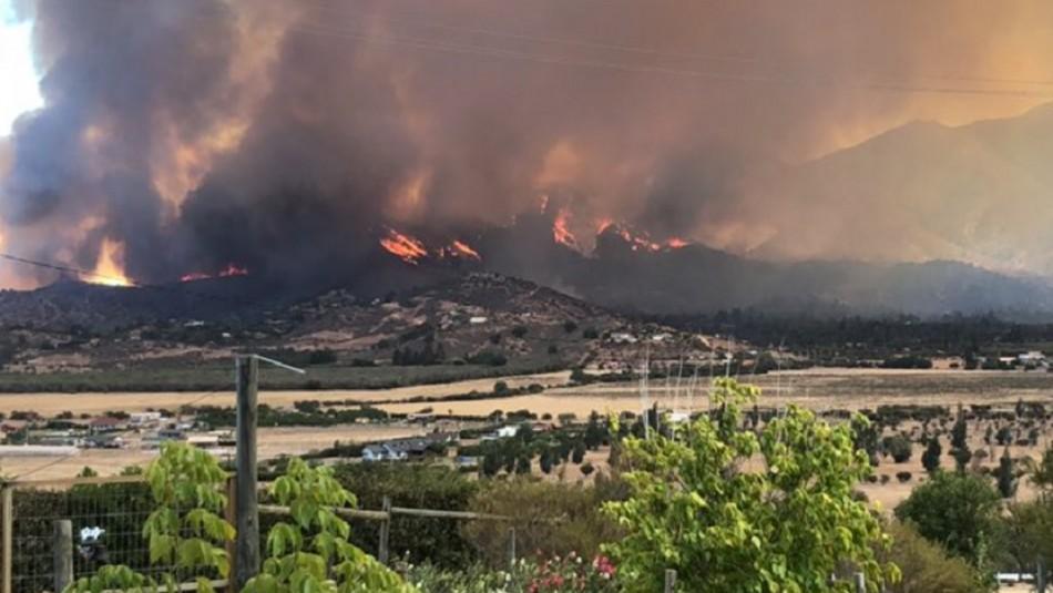 Incendio forestal se registra en comuna de Curacaví: Onemi declara Alerta Roja
