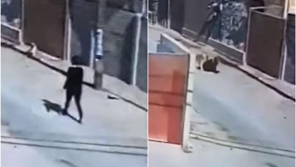 Mujer es mordida por dos perros en plena calle en Copiapó: Dueños de los canes son formalizados