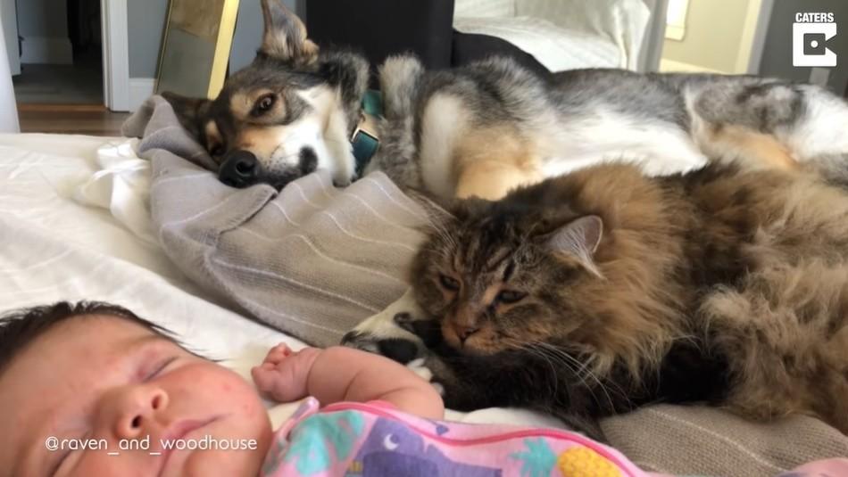 Tres no son multitud: Niña crece con un perro y un gato forjando un vínculo muy especial