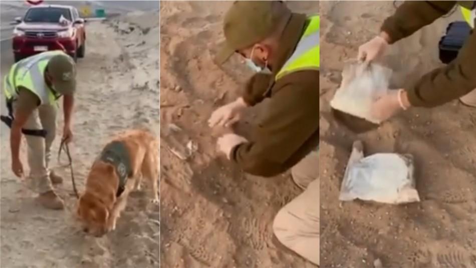 Enterraron droga para burlar control, pero labor de perro adiestrado hizo que los detuvieran