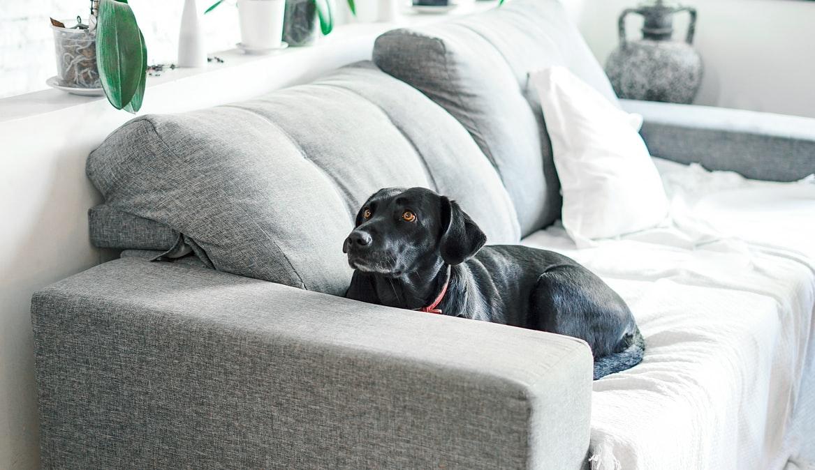 Perro acostado en el sofá