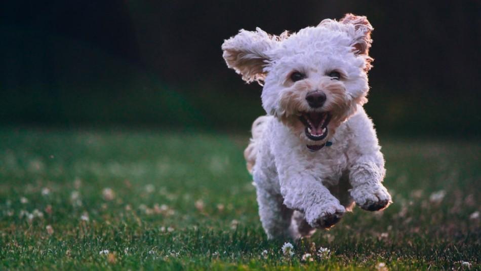 Esto es lo que odia tu perro: 6 cosas que no le gustan a tu mascota