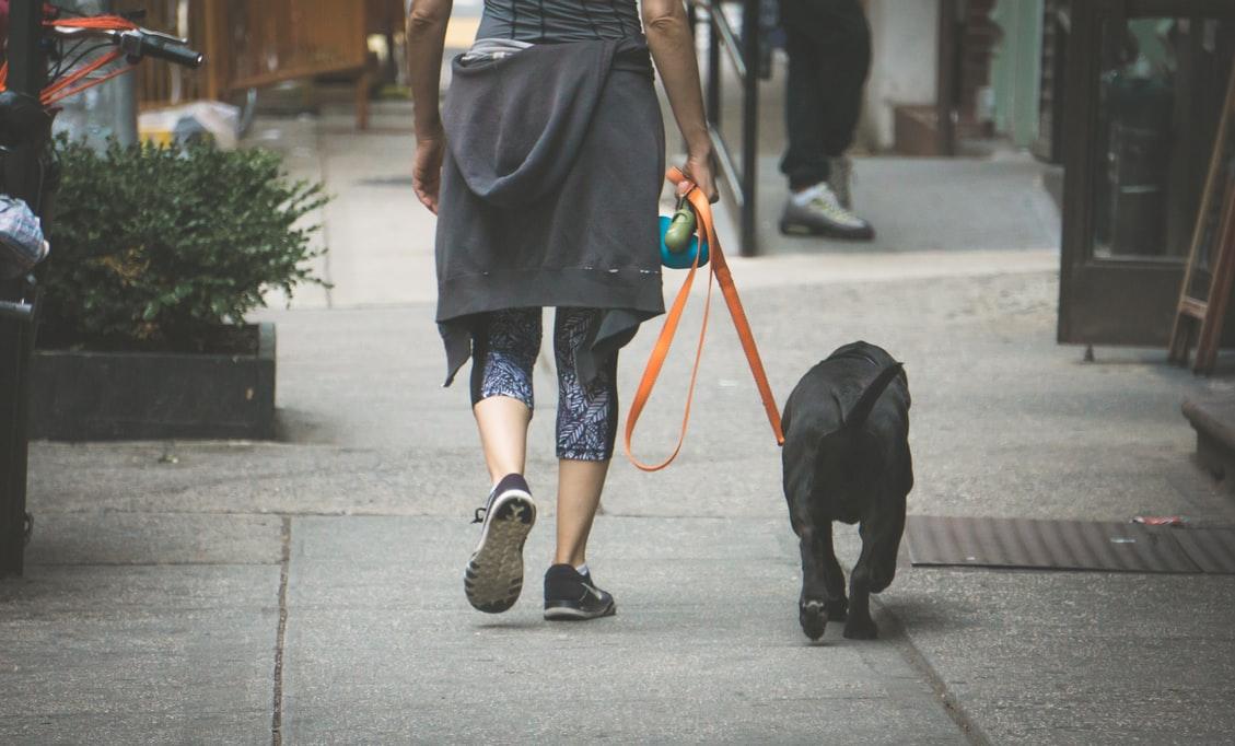 Perro de paseo con su dueño