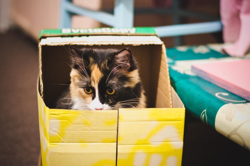 Gato adentro de una caja de cartón