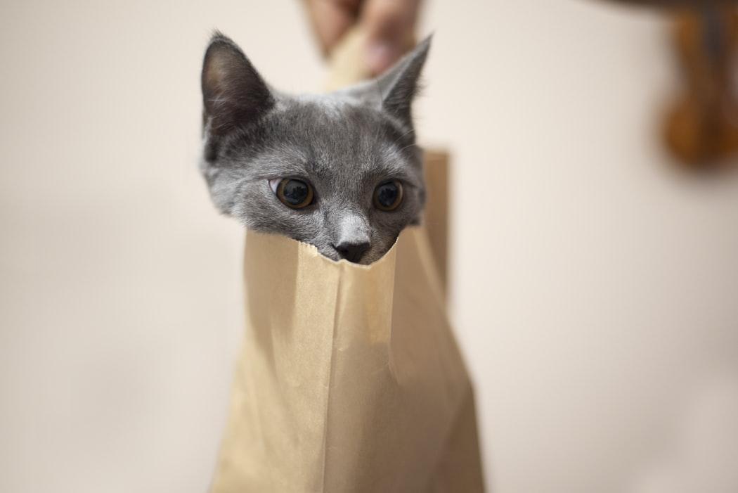 Gato adentro de una bolsa de papel