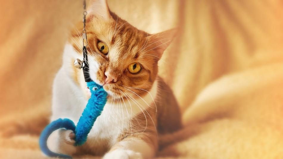 Tres juegos que tus gatos disfrutarán y que puedes armar en casa