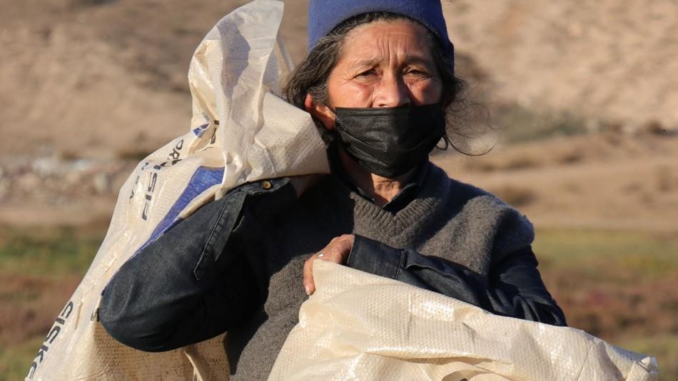 Indignante: Le roban carro a mujer recicladora en Coquimbo y ahora trabaja con sacos al hombro