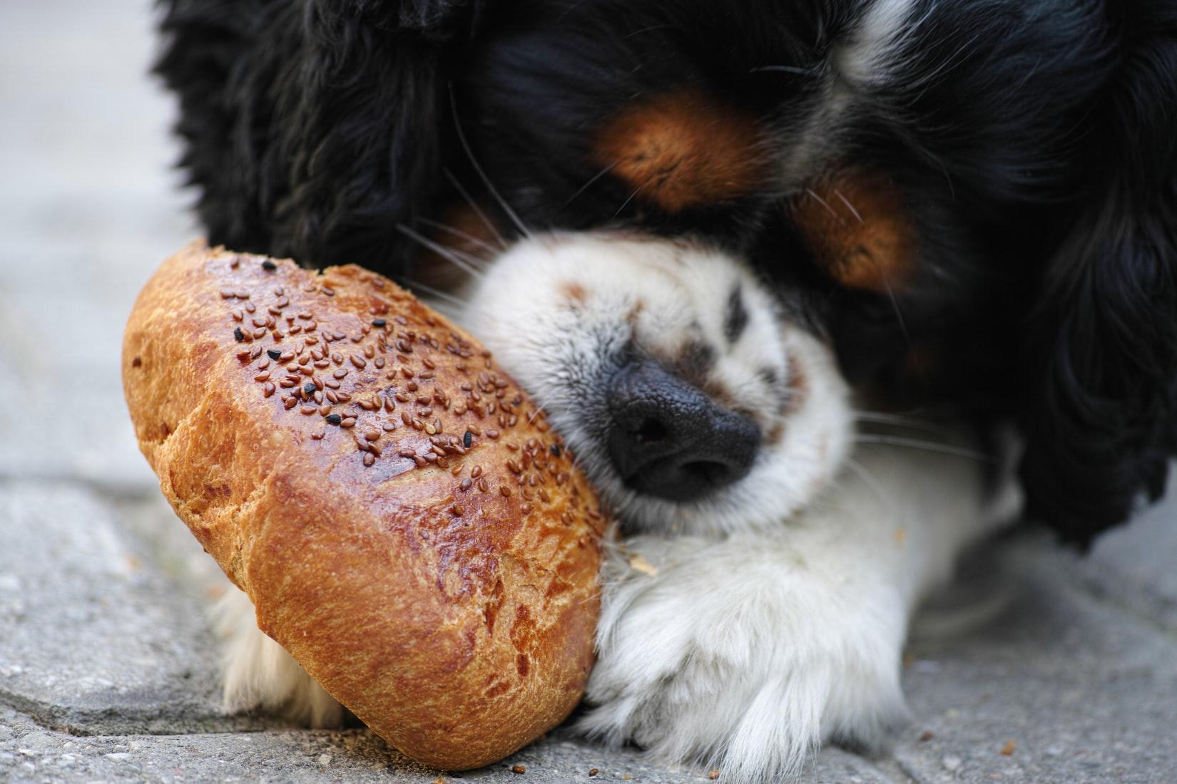 Cane che mangia un pane fortificato