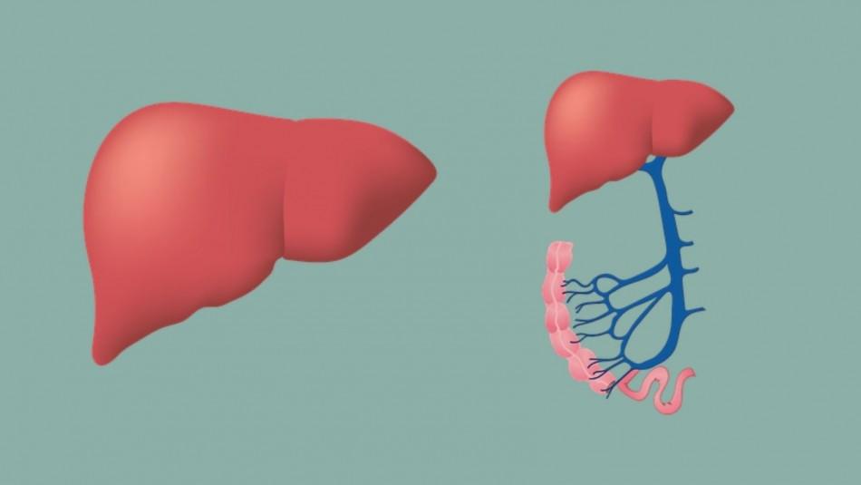 Hepatitis B: Cuáles son los síntomas y cómo se puede evitar