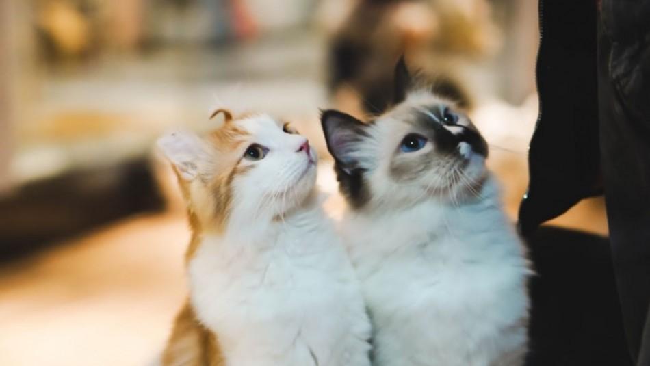 Remedios tóxicos para gatos: Lo que jamás le tienes que dar