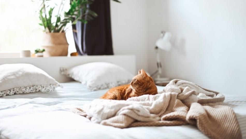 ¿Qué tan limpia está tu cama?: 7 piezas que debes lavar más seguido de lo que piensas