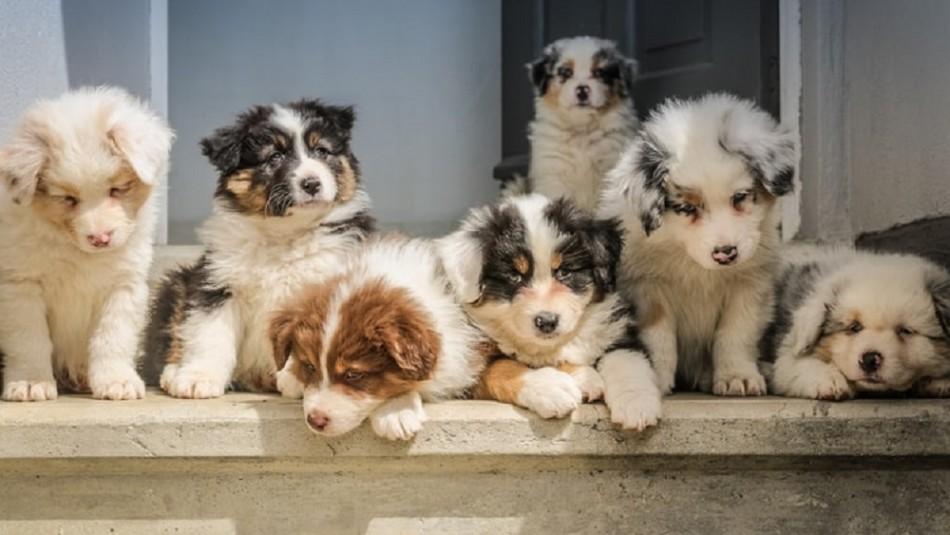 Qué hacer y qué no hacer: La guía definitiva para el cuidado de cachorros