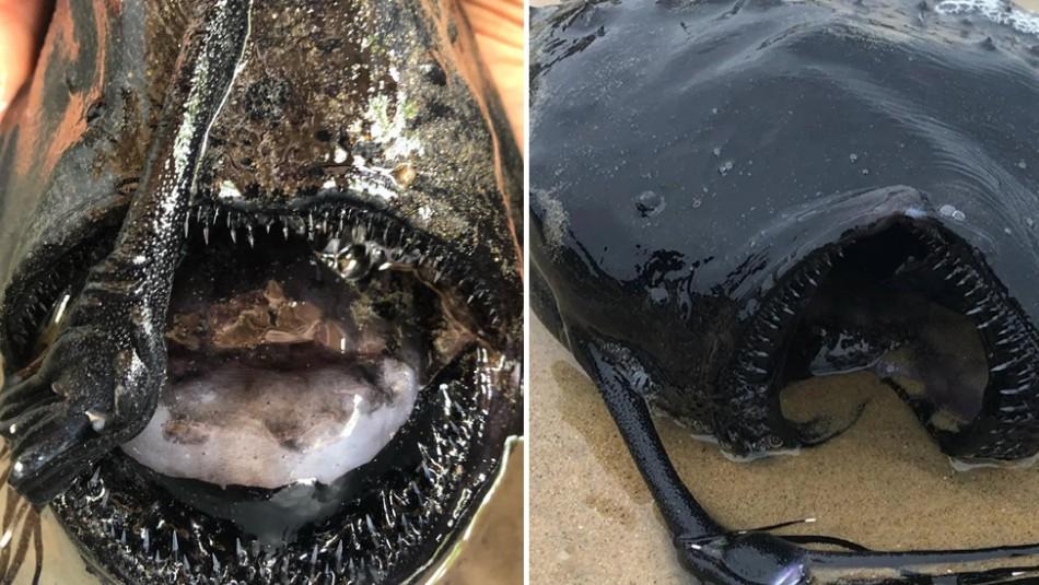 Caminaba por la playa y se encuentra con un monstruoso pez que vive en lo más profundo del mar