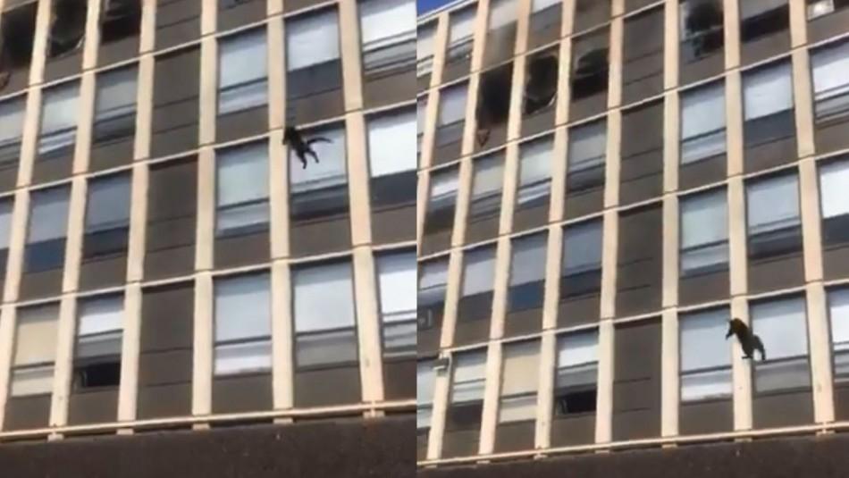 Video muestra a gato que se lanza al vacío para escapar de un edificio en llamas