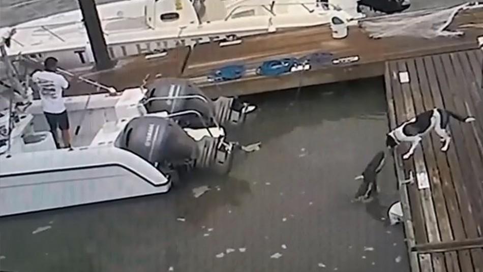 Perro lucha contra cocodrilo de 2 metros que salta del agua: así fue la insólita pelea