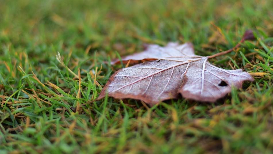 Sigue el frío: Se esperan bajas temperaturas para la mañana de este domingo en Santiago