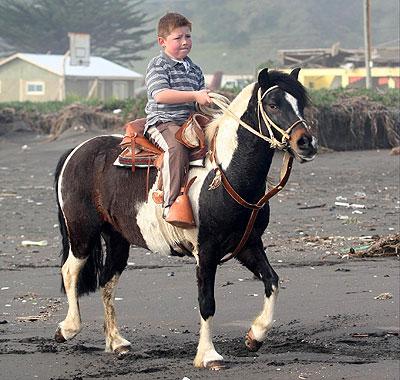 Zafrada sobre el caballo Dominó