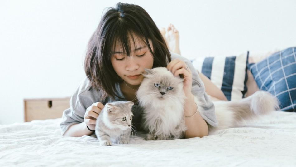 ¿Quieres que tu gato te quiera? Sigue estos 5 consejos