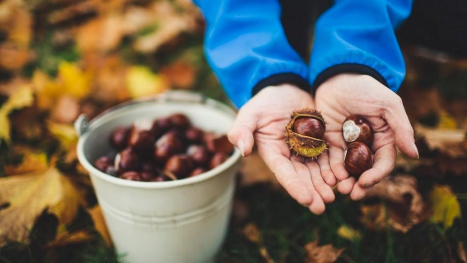 Cinco razones para comprar y comer castañas este otoño