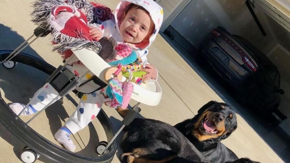Bebé de 10 meses muere tras ser atacada por los dos perros rottweiler de su papá