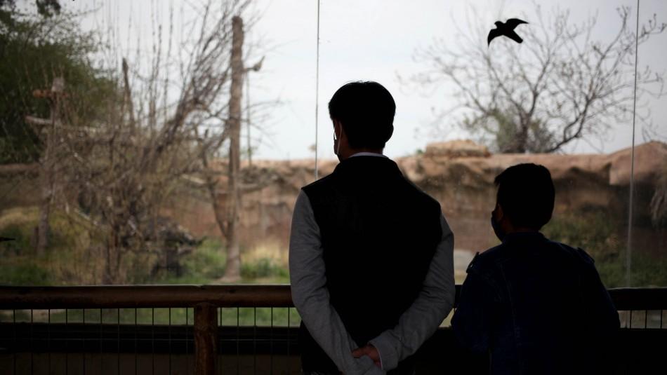 Donó 33 mil entradas al zoo para niños: Prometió a su difunta esposa que