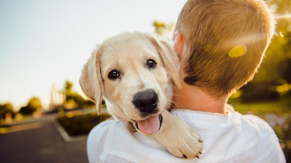 Está en sus genes ser los mejores amigos: Perros nacen preparados para entender a los humanos
