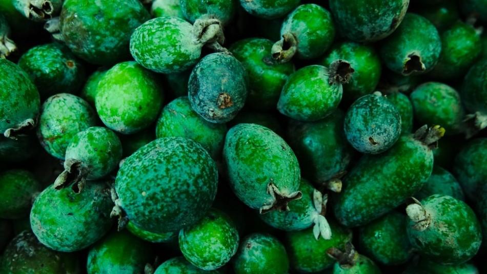 La fruta de la eterna juventud: Conoce sobre los beneficios de la desconocida feijoa
