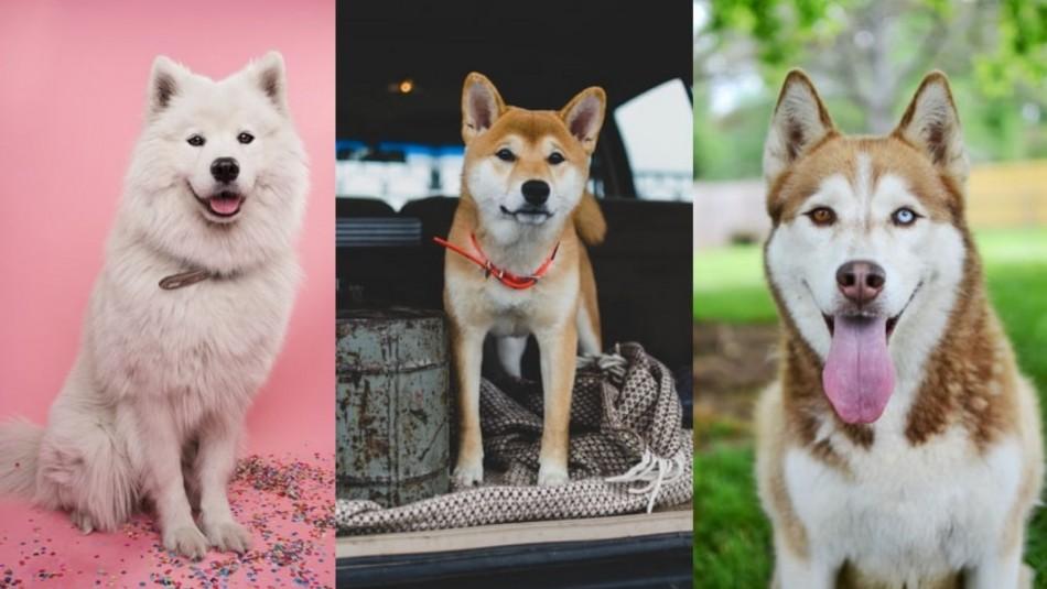 Perros que resisten el frío: 12 razas que están habituados a las bajas temperaturas