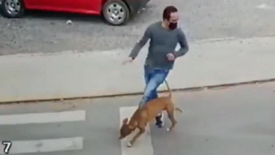 Perro atropella a hombre que sufre grave lesión.