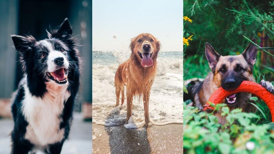 Son muy especiales: Las 15 razas de perros más inteligentes del mundo