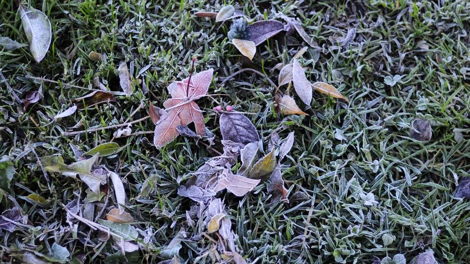 Ola de frío: ¿Hasta cuándo permanecerán las bajas temperaturas?