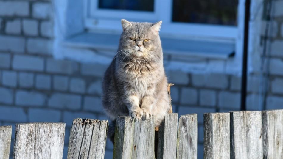 Los más enojones: 5 señales que muestran que tu gato está de pésimo humor