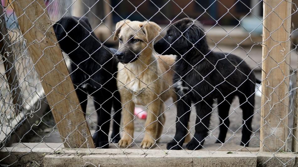 Médico veterinario y polémica por alimentos para mascotas: