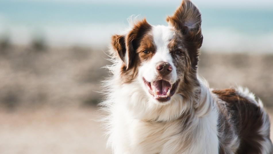 Esto es lo que pasa con tu perro cuando lo castras o esterilizas