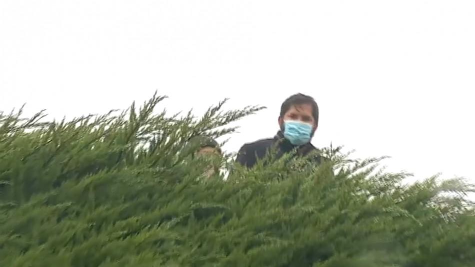 Primarias Presidenciales: Boric vota en Punta Arenas y sube a árbol símbolo de su campaña