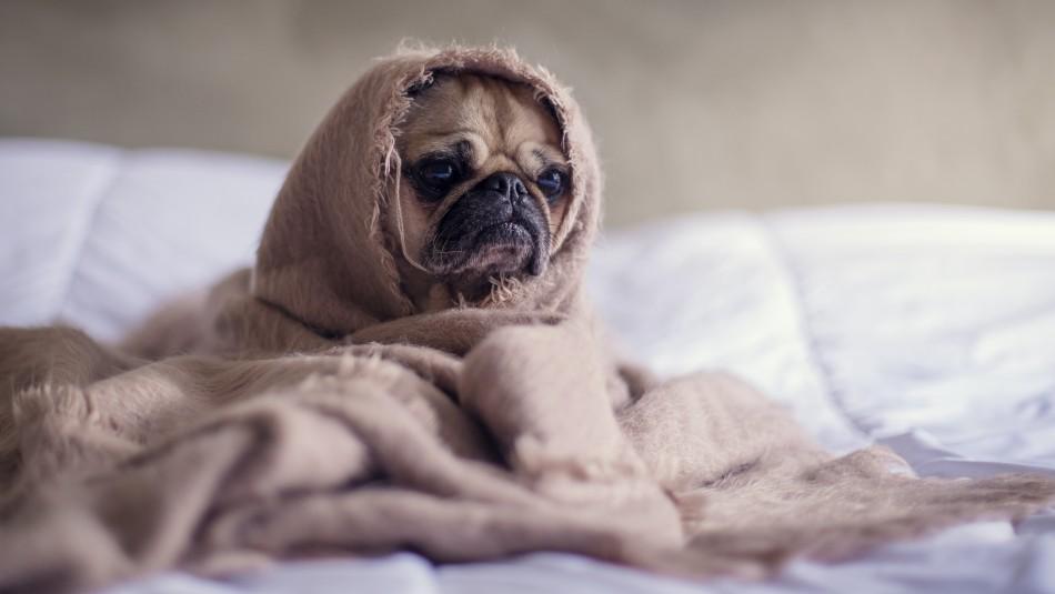 Conoce las señales: 10 signos de que tu perro está estresado
