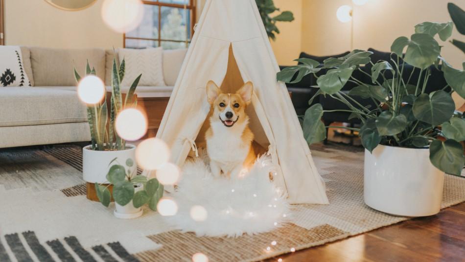 ¿Vuelves a la oficina? Cómo ayudar a tu perro si sufre ansiedad por separación