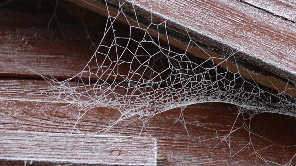 ¿Te dan pánico? Estas son las formas en que puedes mantener tu casa libre de arañas