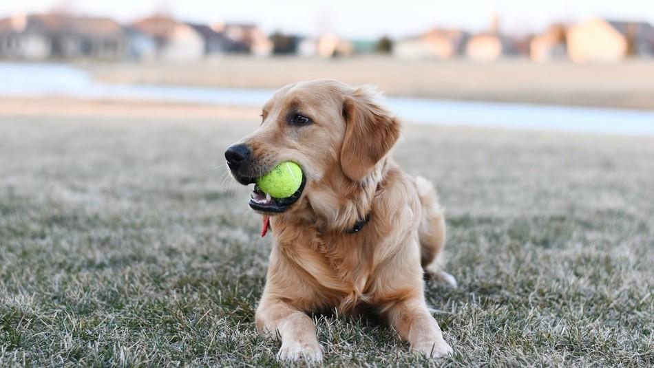 Síntomas de las garrapatas en los perros: Presta atención a estos signos en tu mascota