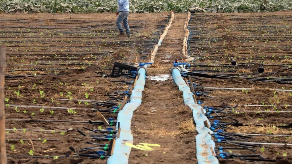 Gobierno decreta emergencia agrícola en cuatro regiones por grave sequía