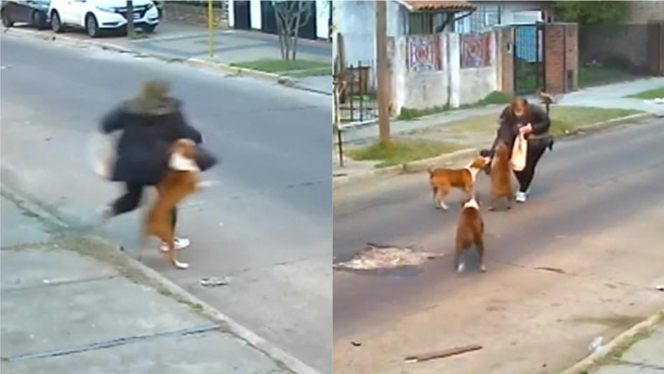 Mujer agredida brutalmente por perros quedó con ataques de pánico y está