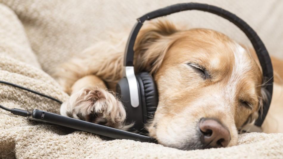 Este es el tipo de música que más le gusta a tu perro